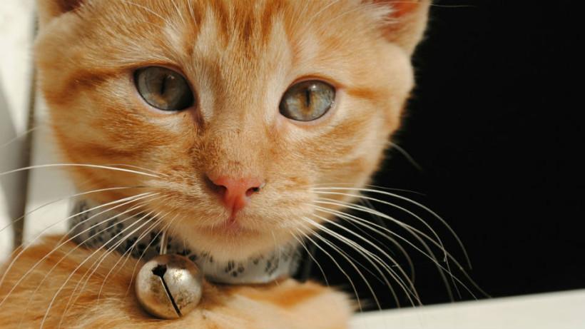 huckleberry-kitten-1_960x540